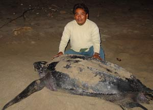 Esteban Paceco with a Leatherback (Laud) Turtle